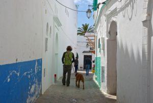 Mit Hund durch die Medina