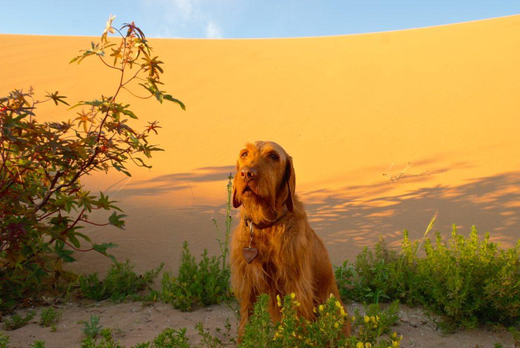 Marokko mit Hund im Sand