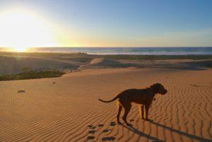Hund am Strand vin Sidi Yssahak