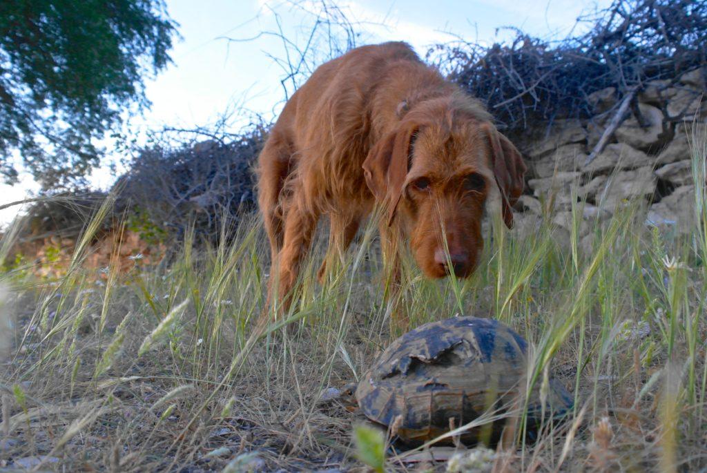 Hund trifft Schildkröte
