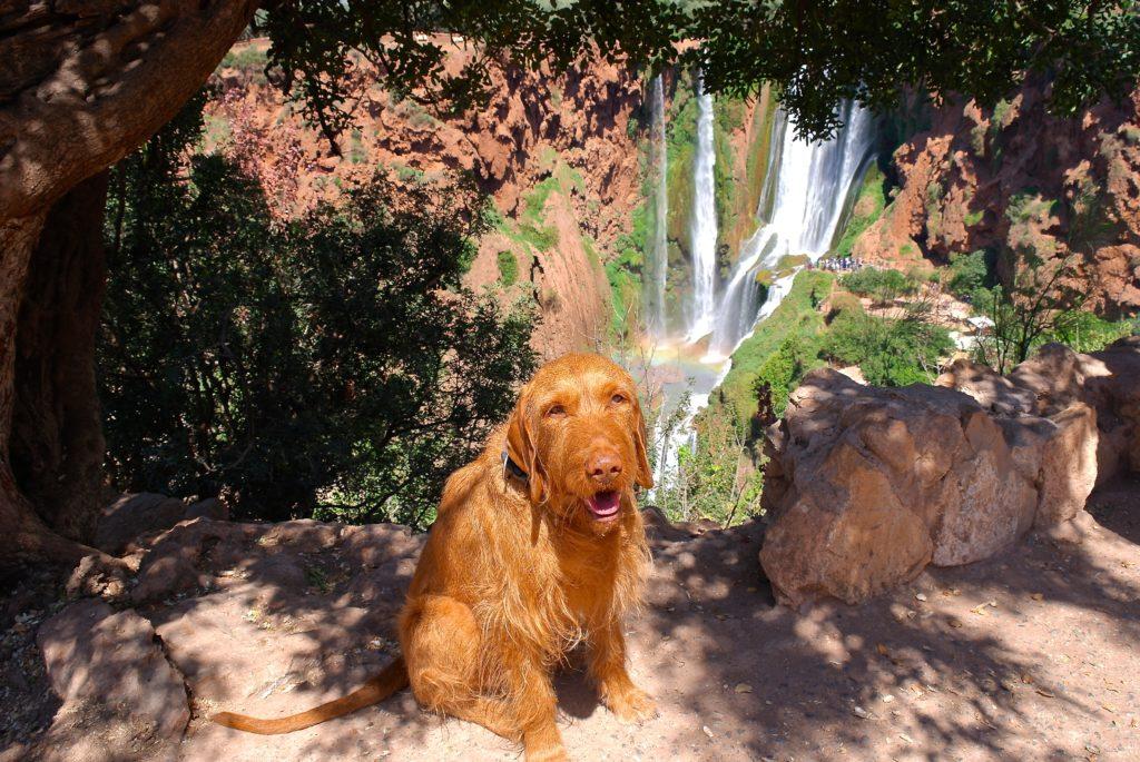 Marokko mit Hund an den Ouzoud Wasserfällen