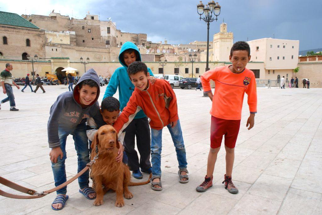 Marokko mit Hund führt zu viel Aufmerksamkeit