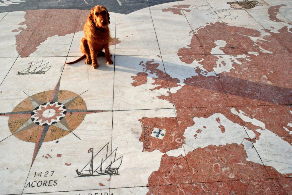 Startfoto Tier- und Reiseblog
