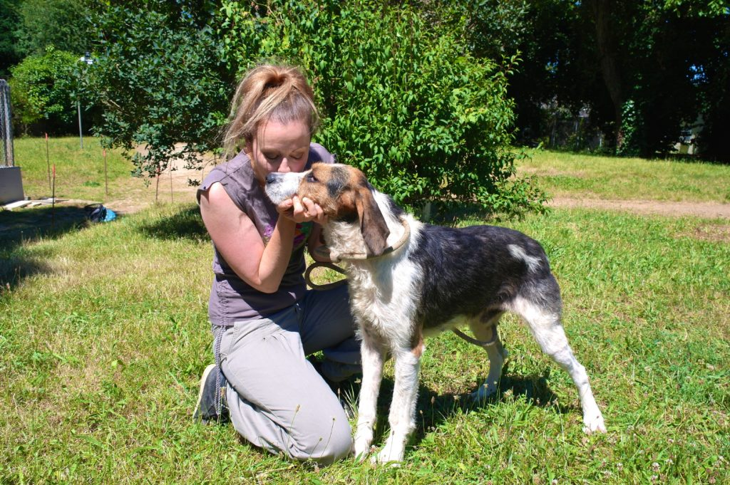 Griffon-Mix Flick gehört zur Riege der Jagdhunde im Tierheim Poitiers