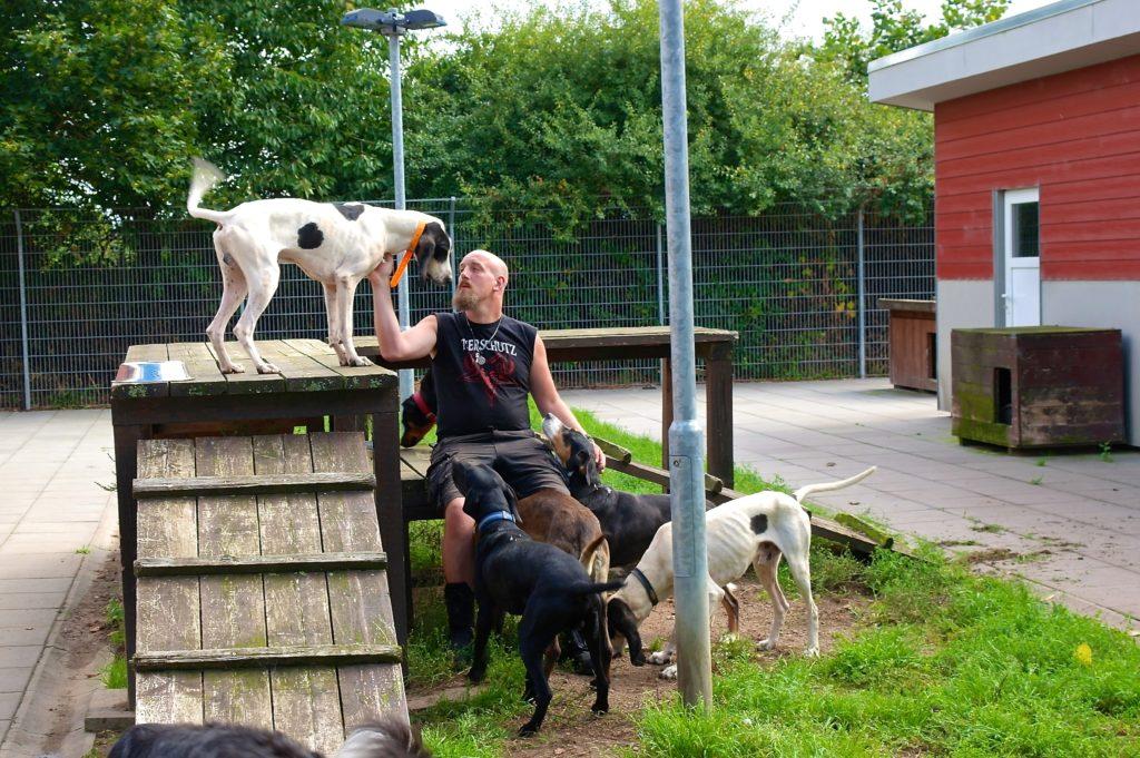 Auch in Lübeck warten französische Jagdhunde im Tierheim auf ein neues Zuhause