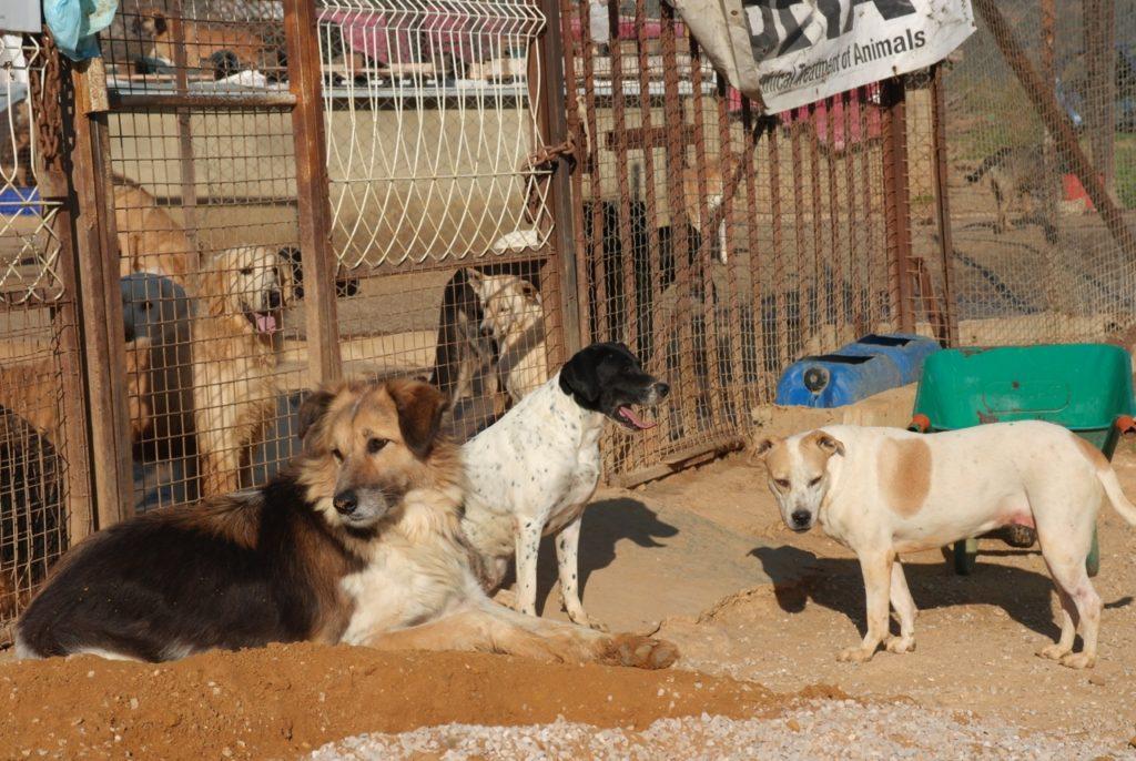 Hunde im und vor dem Auffang der Tierschutzorganisation BETA