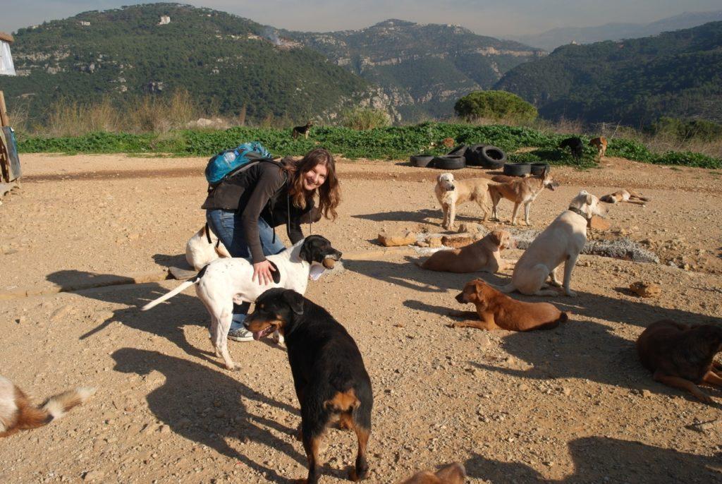 Tierschutz-Hunde wollen spielen