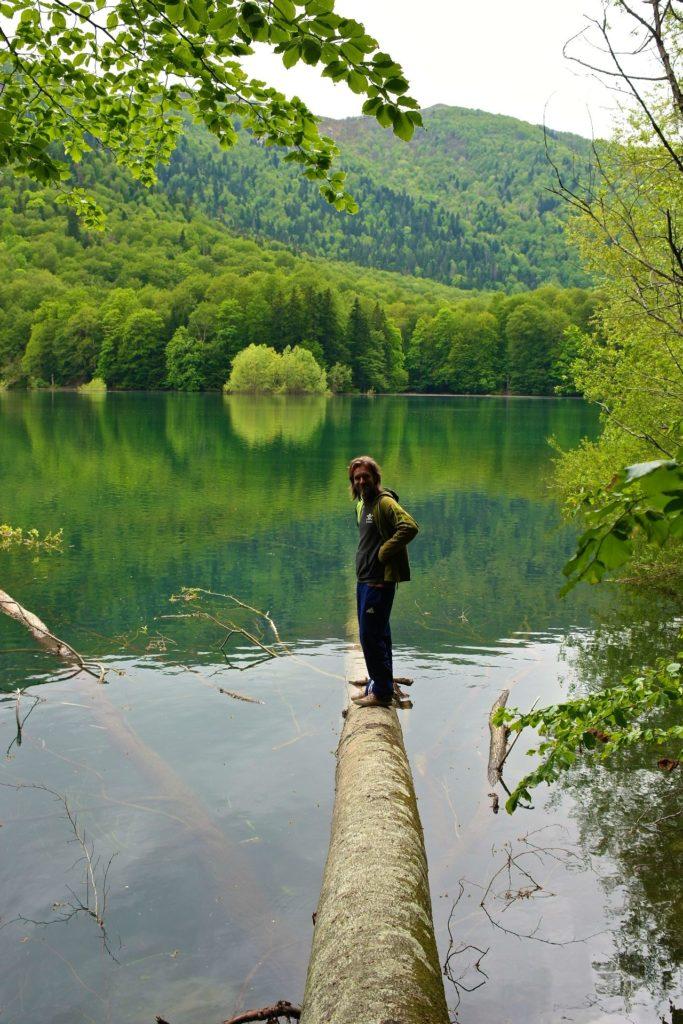 Umgefallene Bäume im Nationalpark Biogradska Gora