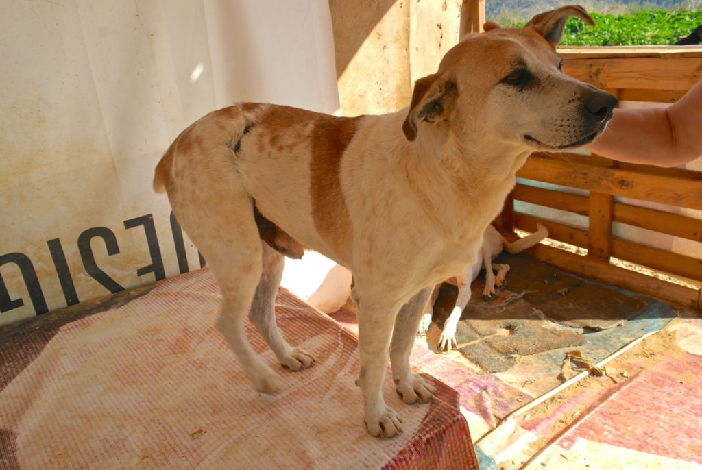 Hund mit Brandverletzungen