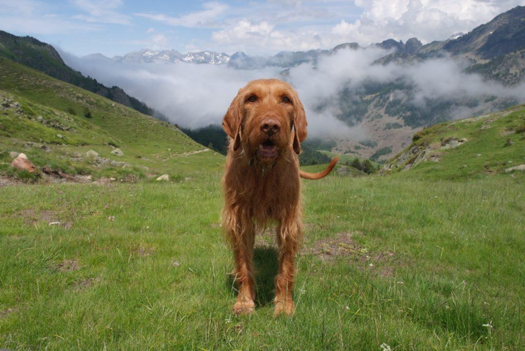 Hund wandert in den Pyrenäen