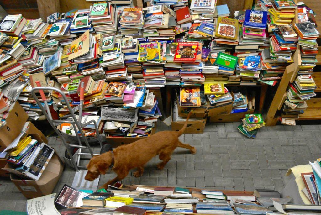 Hund erkundet den Bücherspeicher