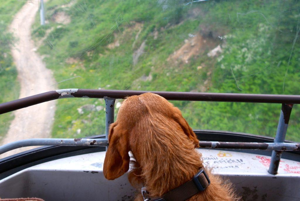 Seilbahnfahrt mit Hund in die Pyrenäen