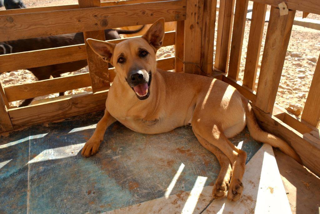 Tierschutzorganisation kümmert sich um Hund mit drei Beinen
