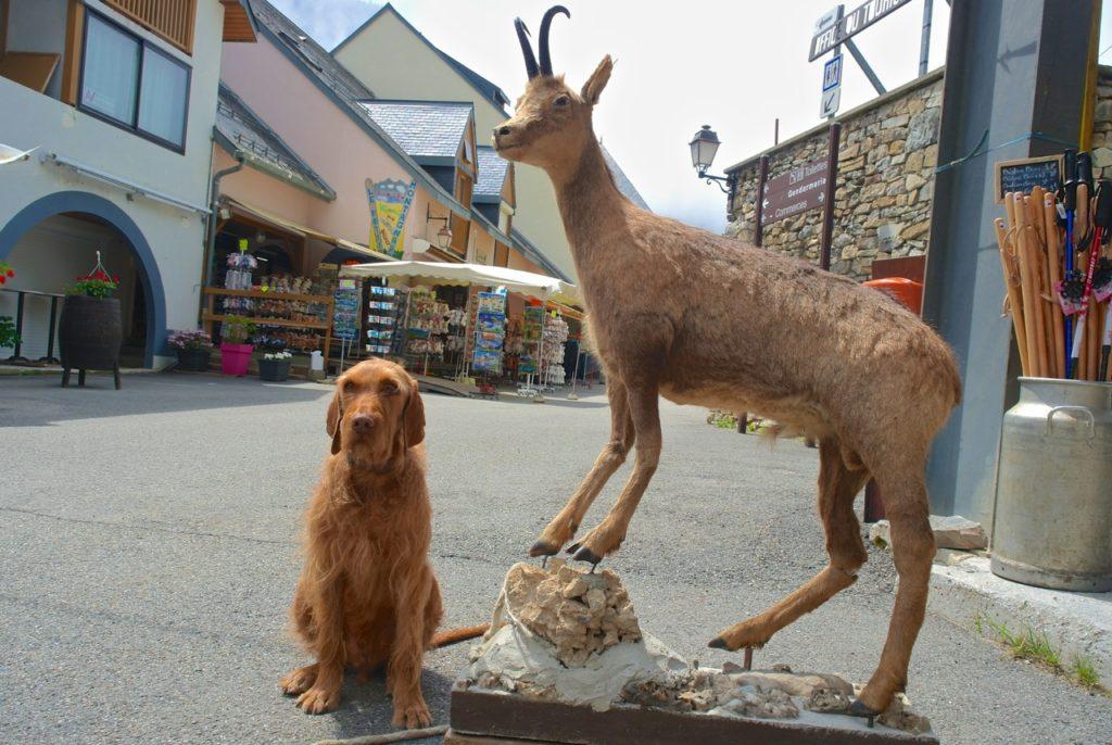 Hund und Gams in Artouste