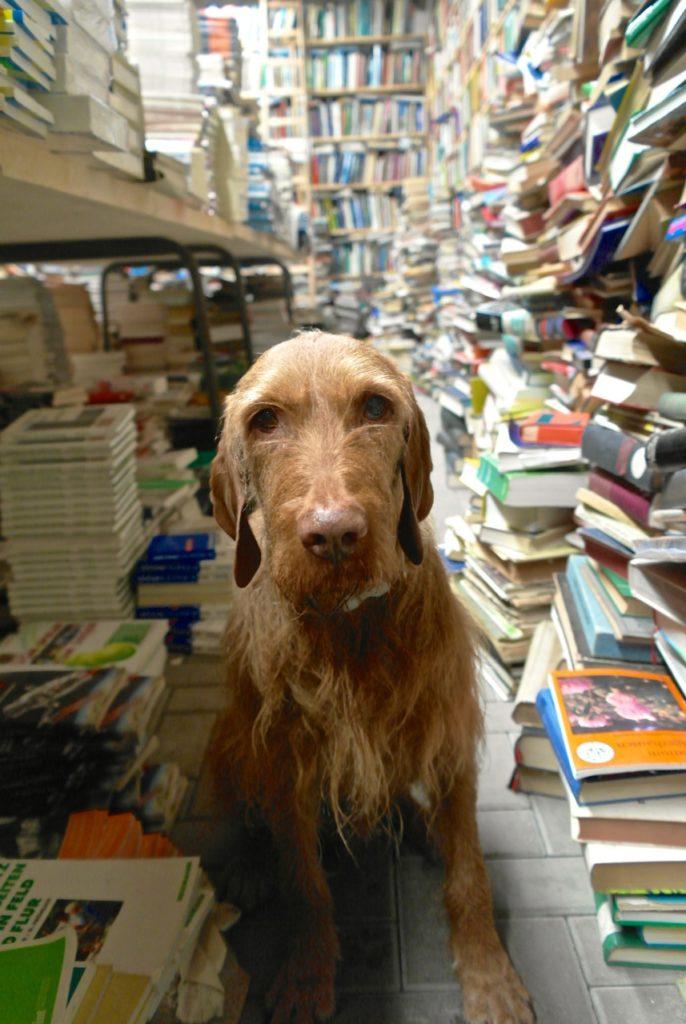 Hund auf der Bücherburg Katlenburg