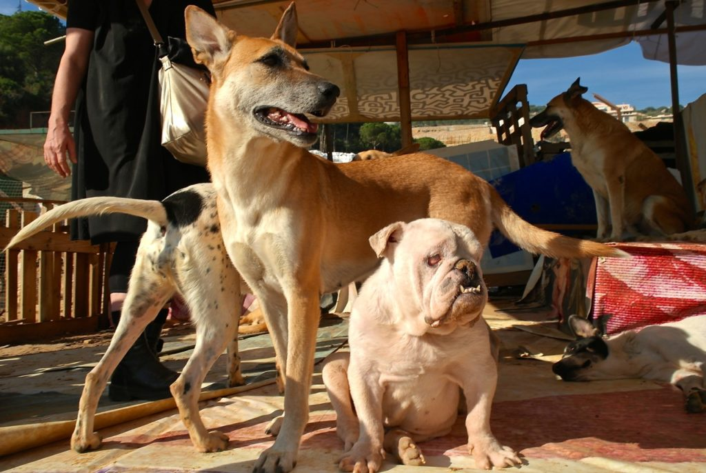 Tierschutzorganisation BETA sorgt sich um verschiedene Hunde