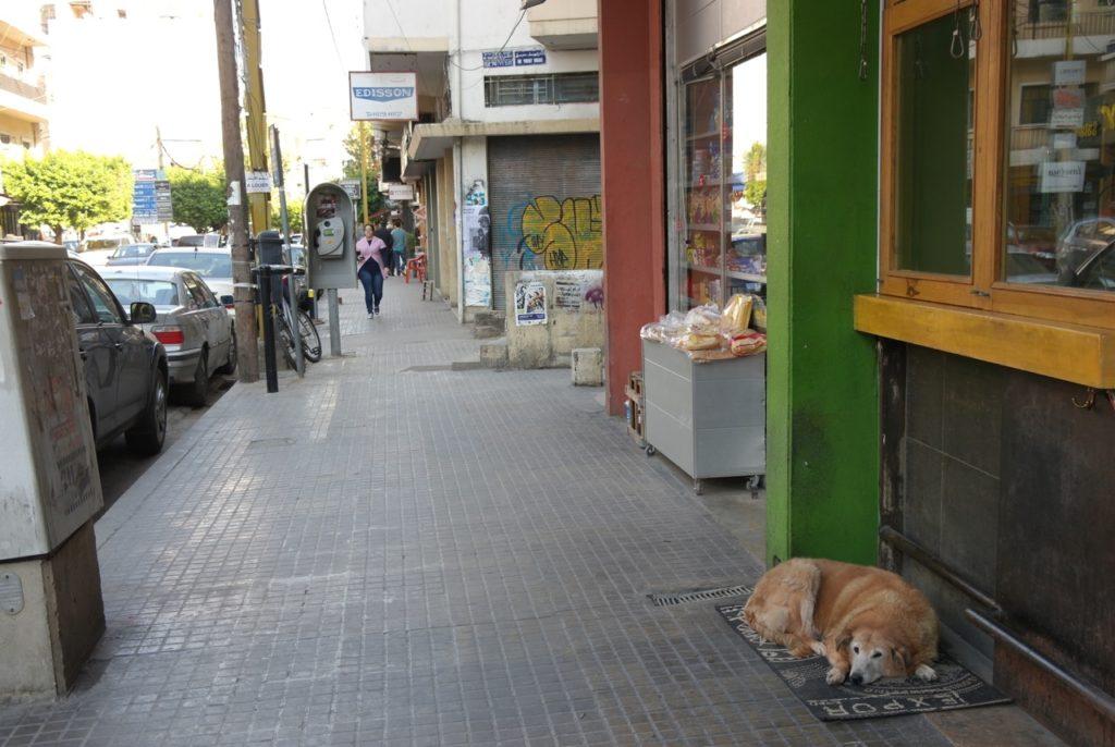 Hund in der Innenstadt Beiruts