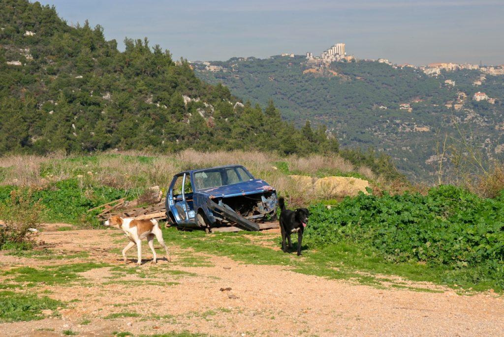 Hunde aufgenommen von der Tierschutzorganisation BETA