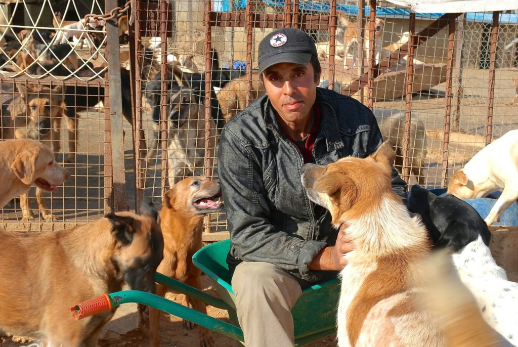 Kumar arbeitet bei der Tierschutzorganisation BETA