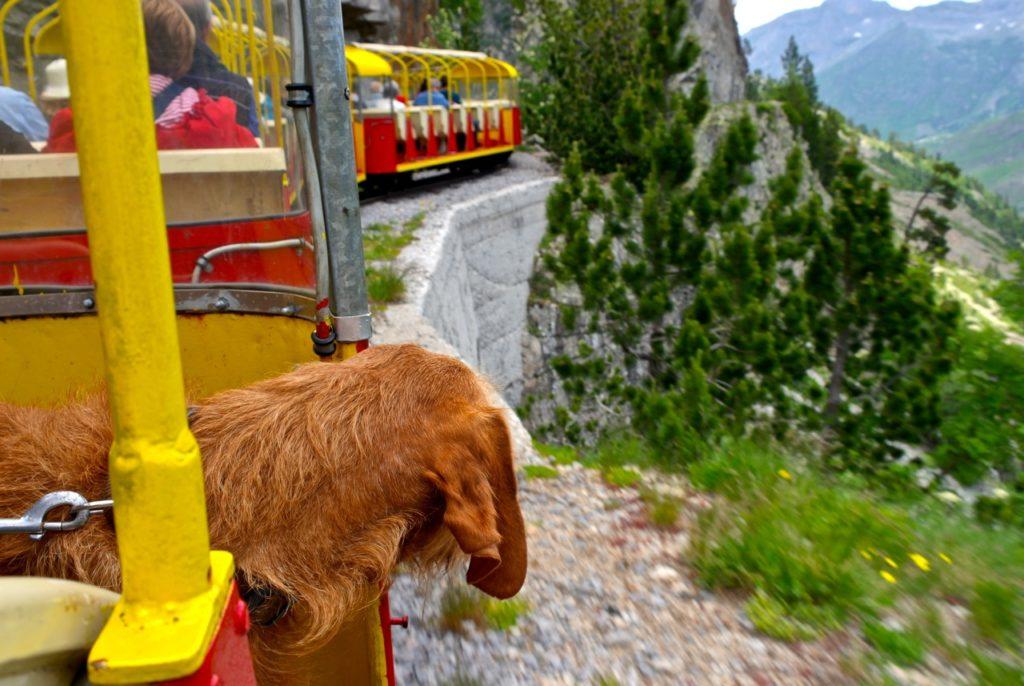 Hund fährt mit Zug durch die Pyrenäen