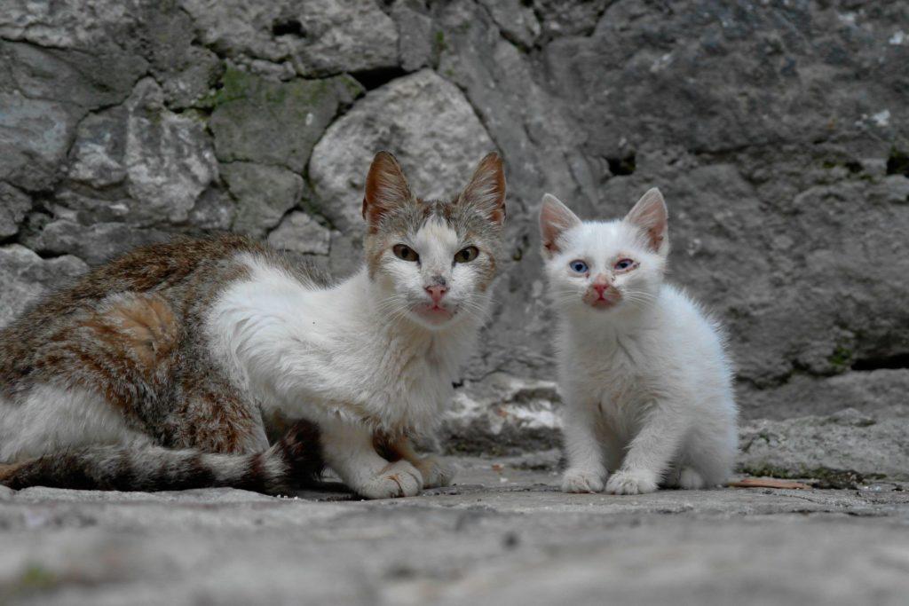 In Kotor gibt es viele Streunerkatzen