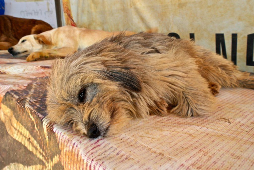 Kleiner Hund bei der Tierschutzorganisation BETA