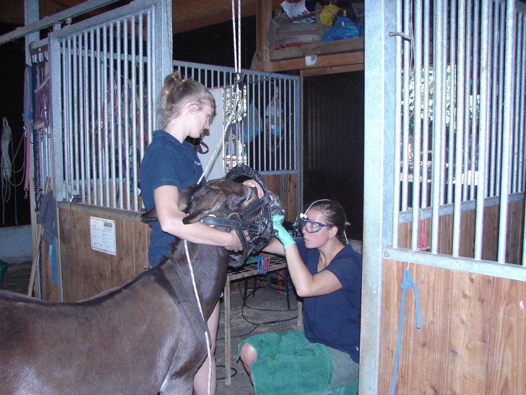 Zahnärztin in der Esel-Auffangstation Corfu Donkey Rescue