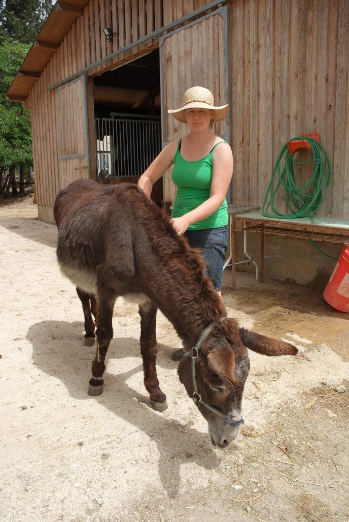 Freiwilligen-Einsatz in der Esel-Auffangstation