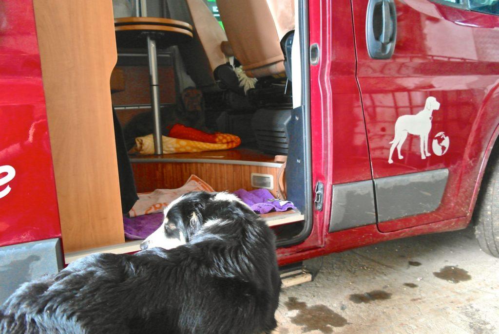 Gutes Zeichen: Hunde finden die Fahrzeugbeschriftung gut