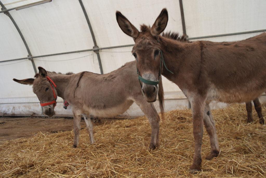 Wetterschutzzelt der Esel-Auffangstation Corfu Donkey Rescue