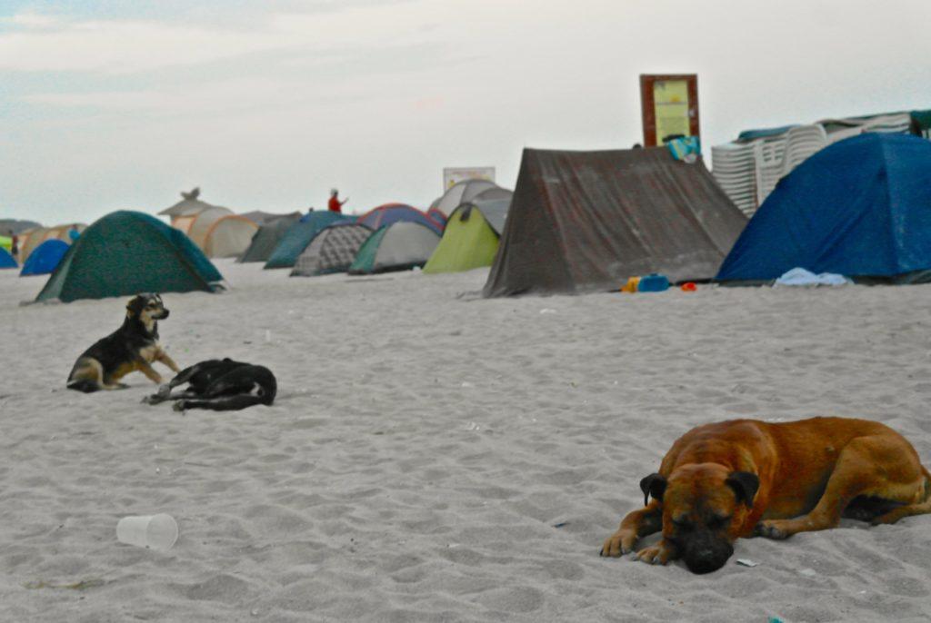 Zelten am Strand von Vama Veche