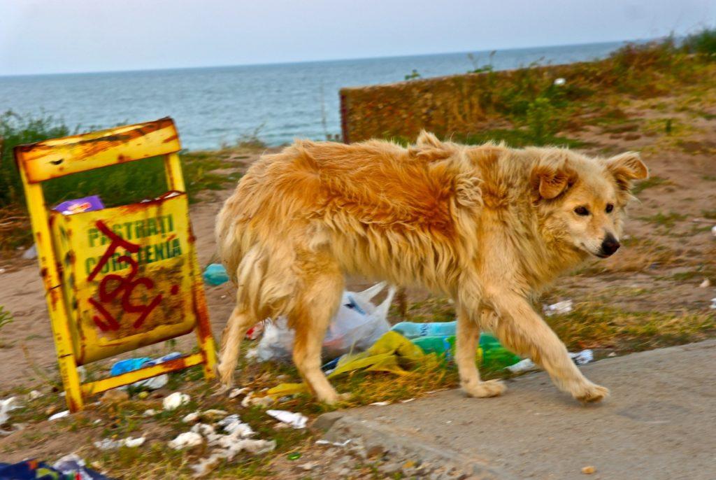 Streunerhund in Rumäniens Badeort