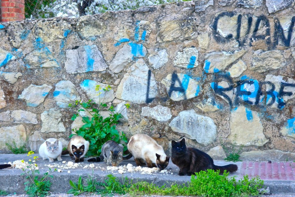 Katzen werden von den Einwohnern Cazorlas gefüttert