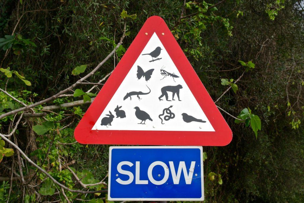 Tiere im Naturschutzgebeite Gibraltar