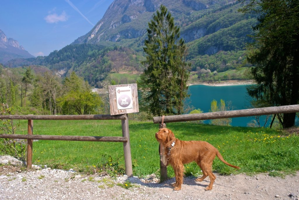 Es gibt mehrere Hundestrände am Lago di Tenno