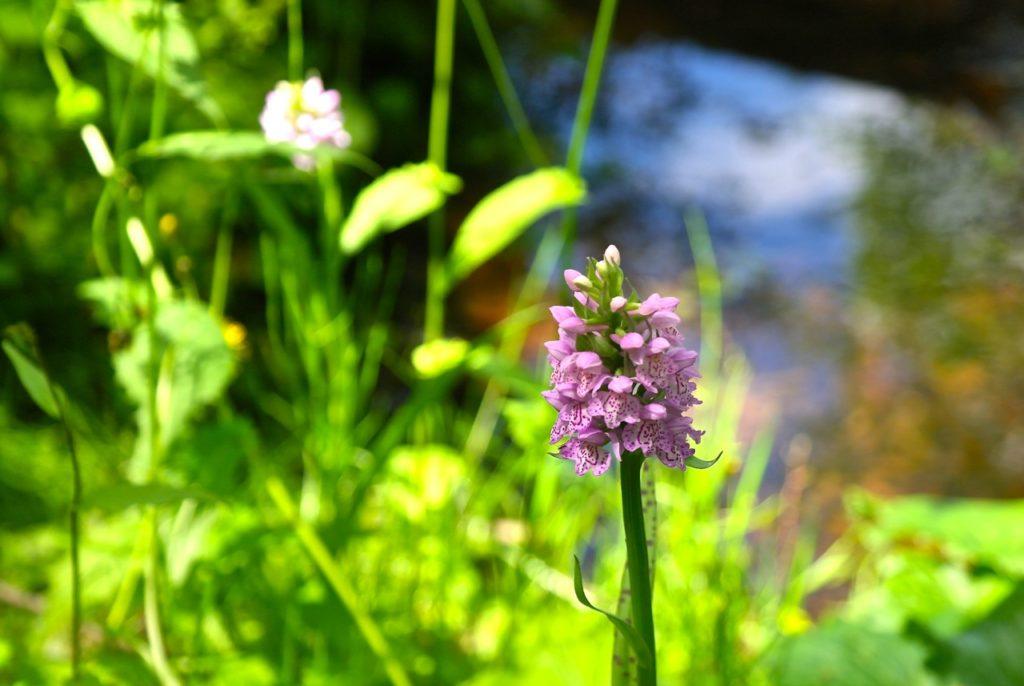 Botanikpfad Nationalpark Litauen