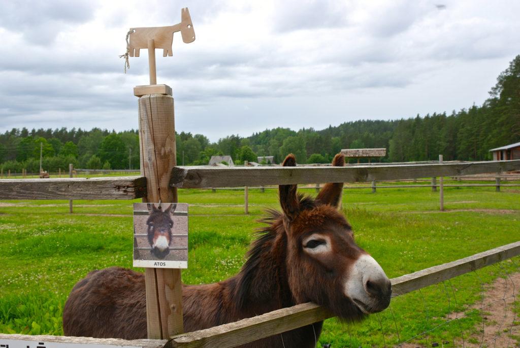 Esel auf Kamel-Farm