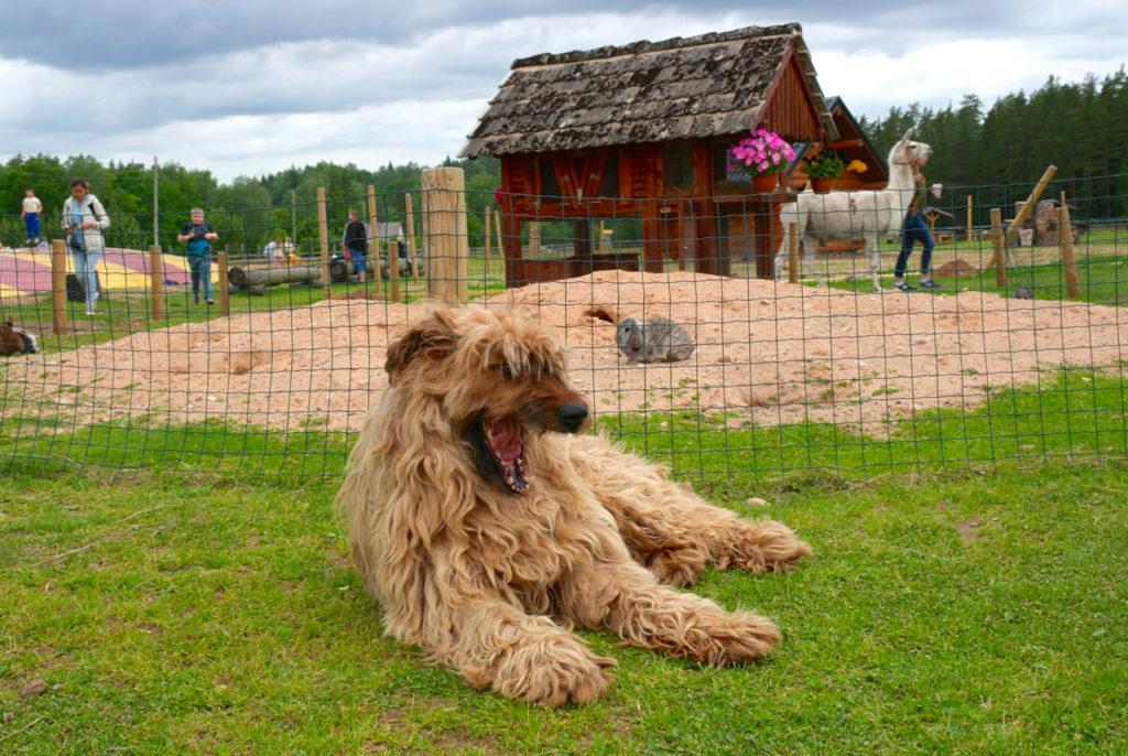 Hund im Rakši-Park