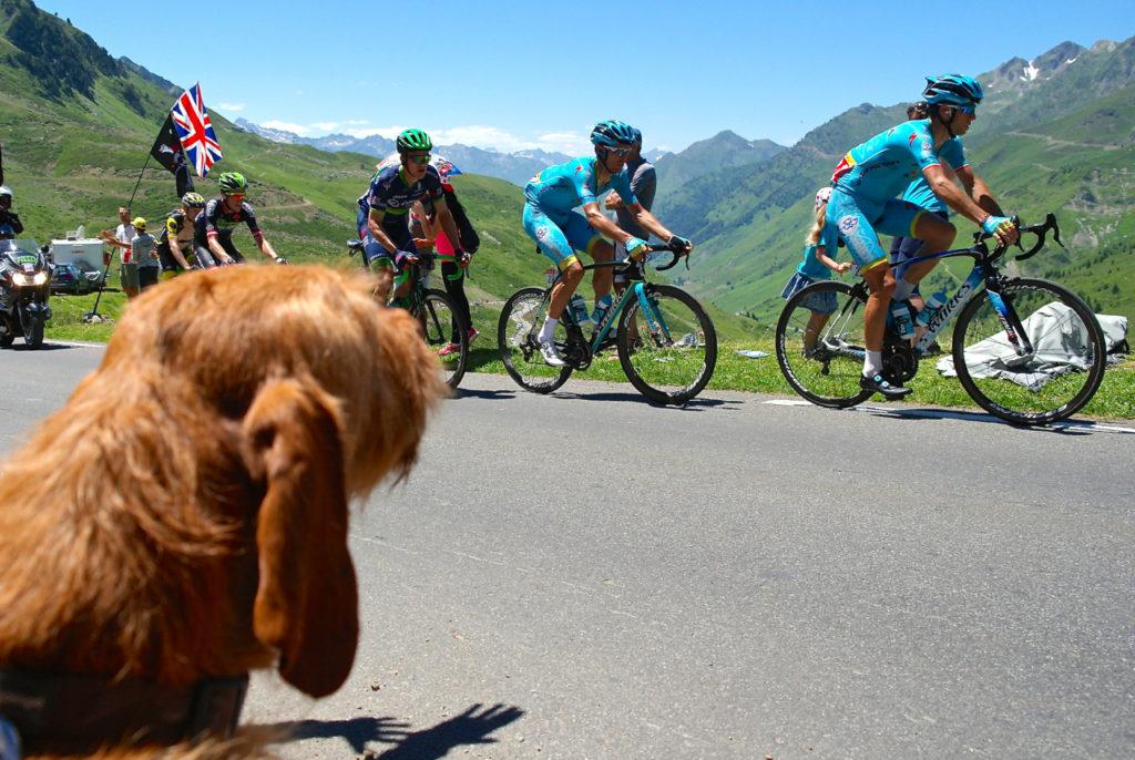 Hund feuert Tour de France an