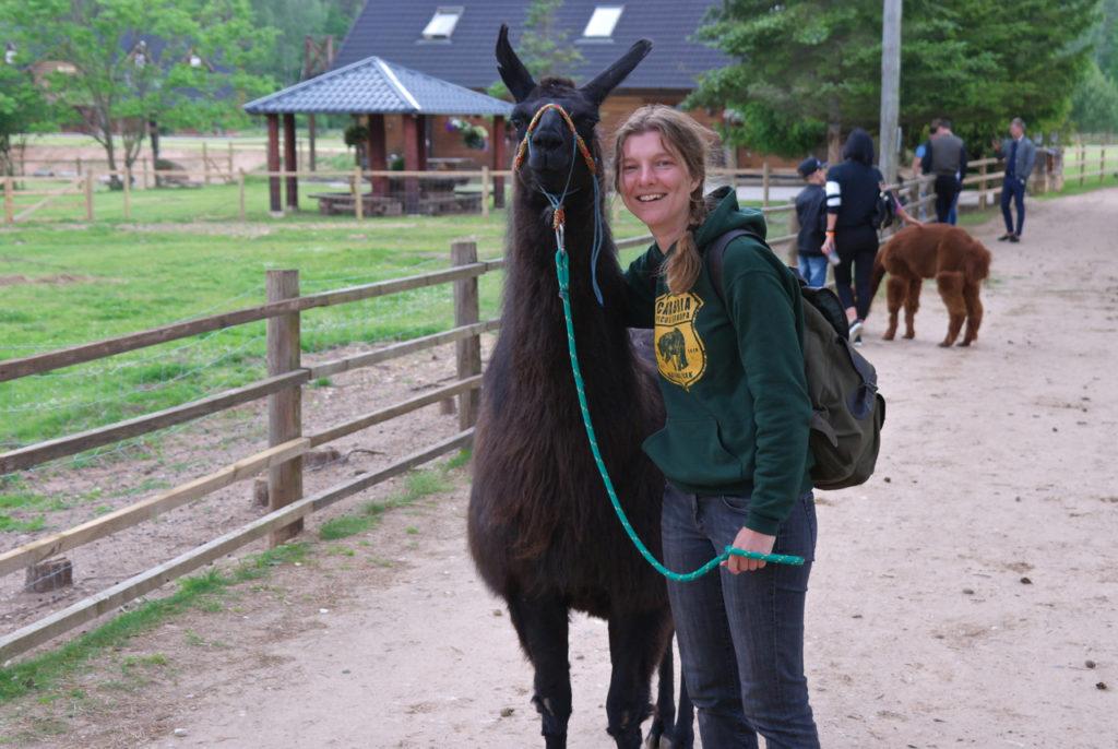 Lamawanderung auf Kamel-Farm