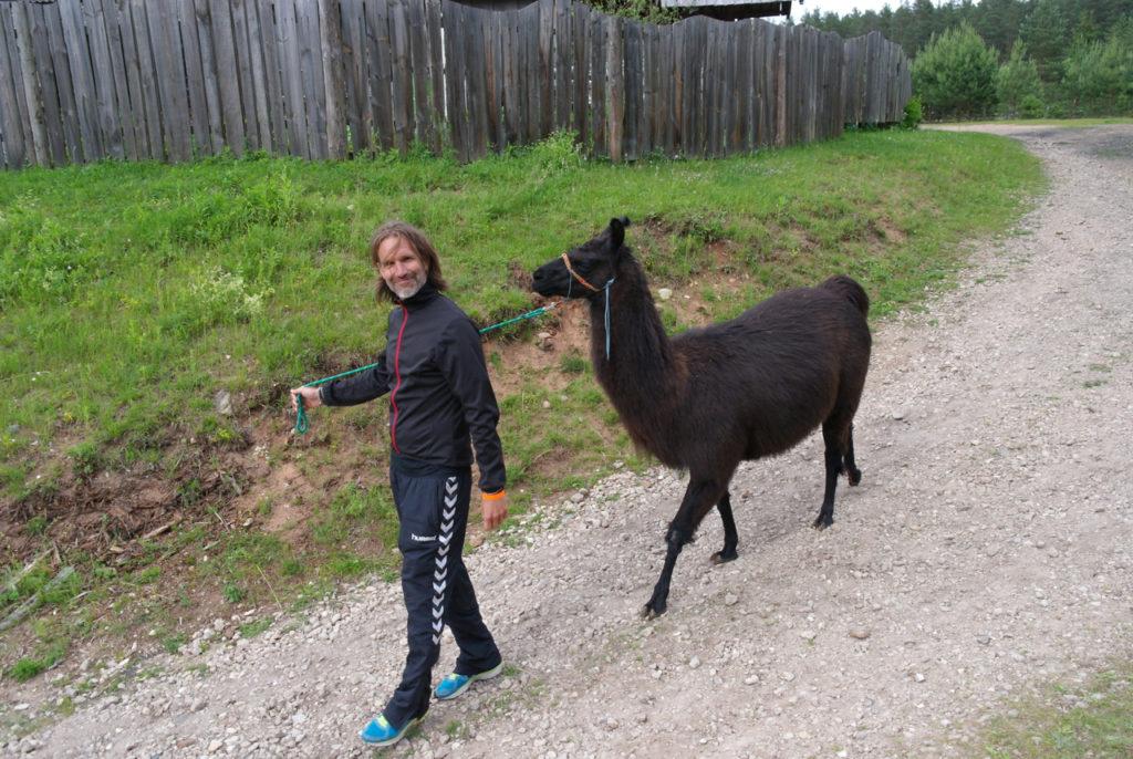 Lama-Wandern auf Kamel-Farm
