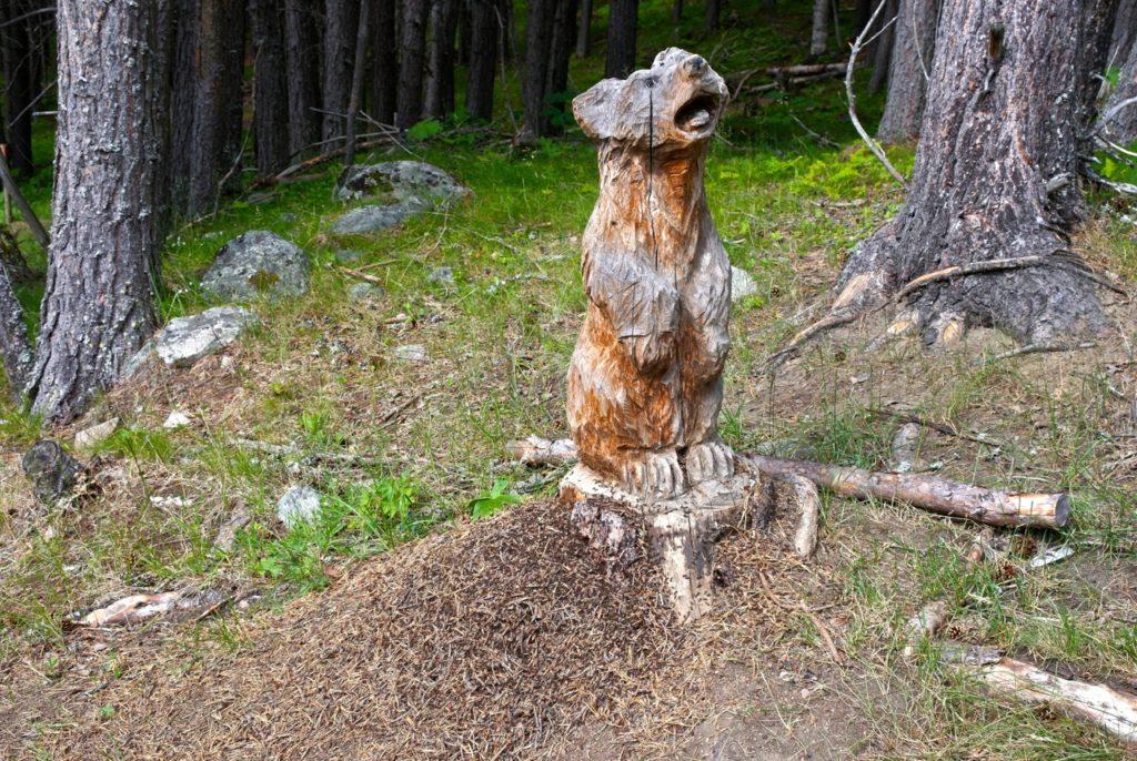 Bärenwald auf Bauernhof in Norwegen