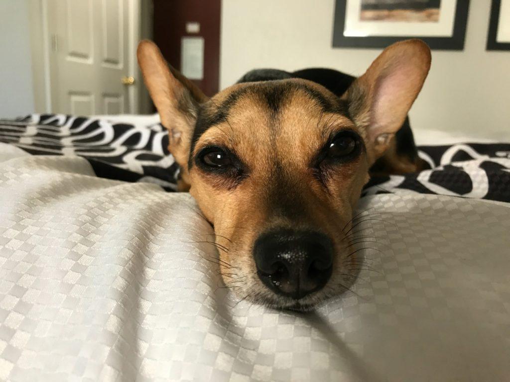 Hund allein zu Haus