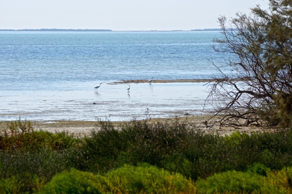 Wasservögel imÉtang du Vaccarès