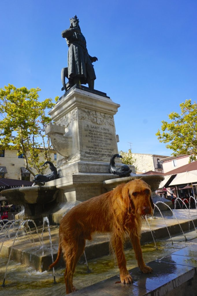 Hunde-Erfrischung in Aigues-Mortes