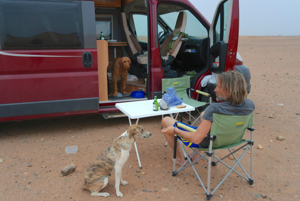 Streunerhündin kommt zum Camper - Streunerhunde in Marokko