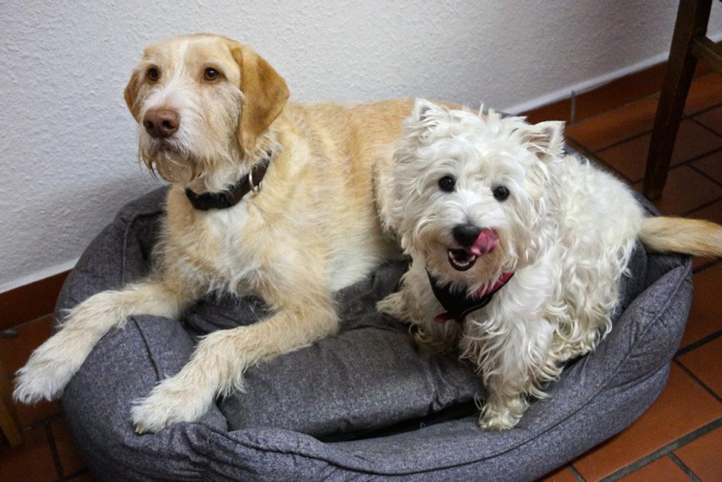 Jule und Hetty auf ihrem Platz im Tierheim-Büro