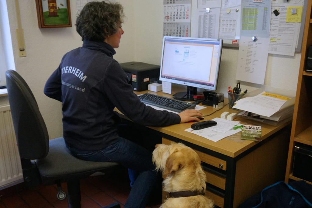 Hund Jule mit am Schreibtisch