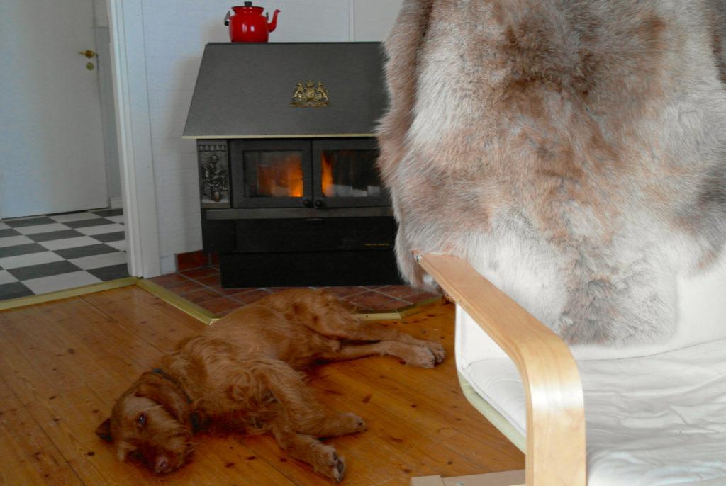 Hund am Kamin in Schweden