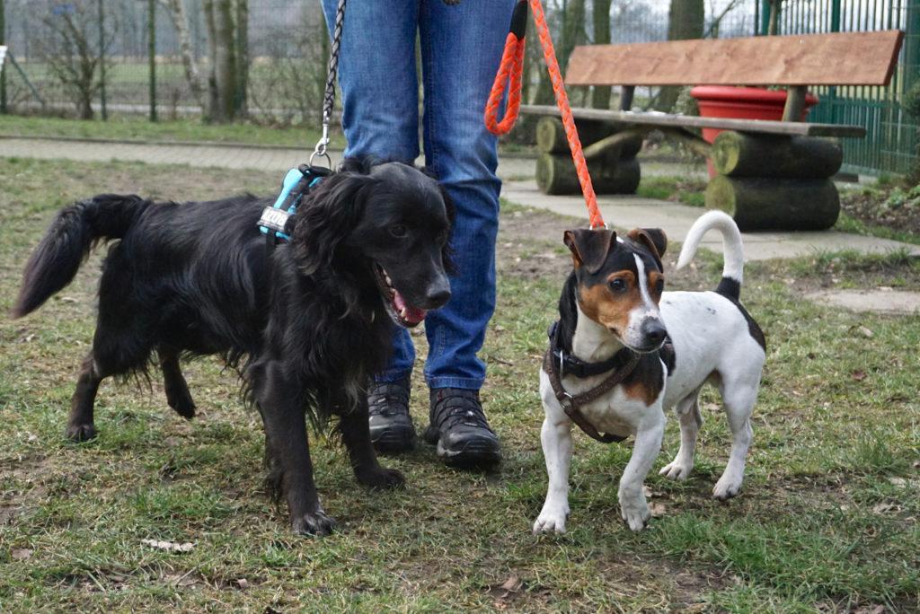 Hunde-Duo zu vermitteln